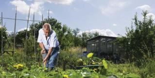 Credit Crunch Gardening