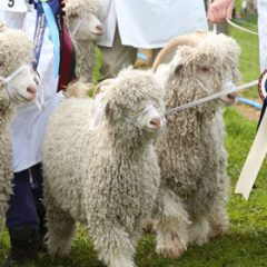 Win tickets to The Devon County Show 2018