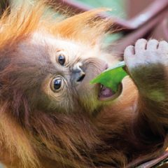 Win a Family Ticket to Monkey World!