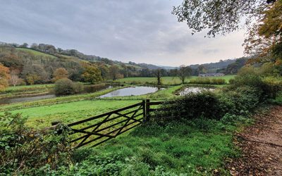 Bickleigh to Cadeleigh Circular Walk