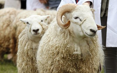 Win One of Six Pairs of Tickets to the 2021 Devon County Show!