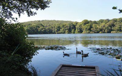 Decoy Country Park Circular Walks
